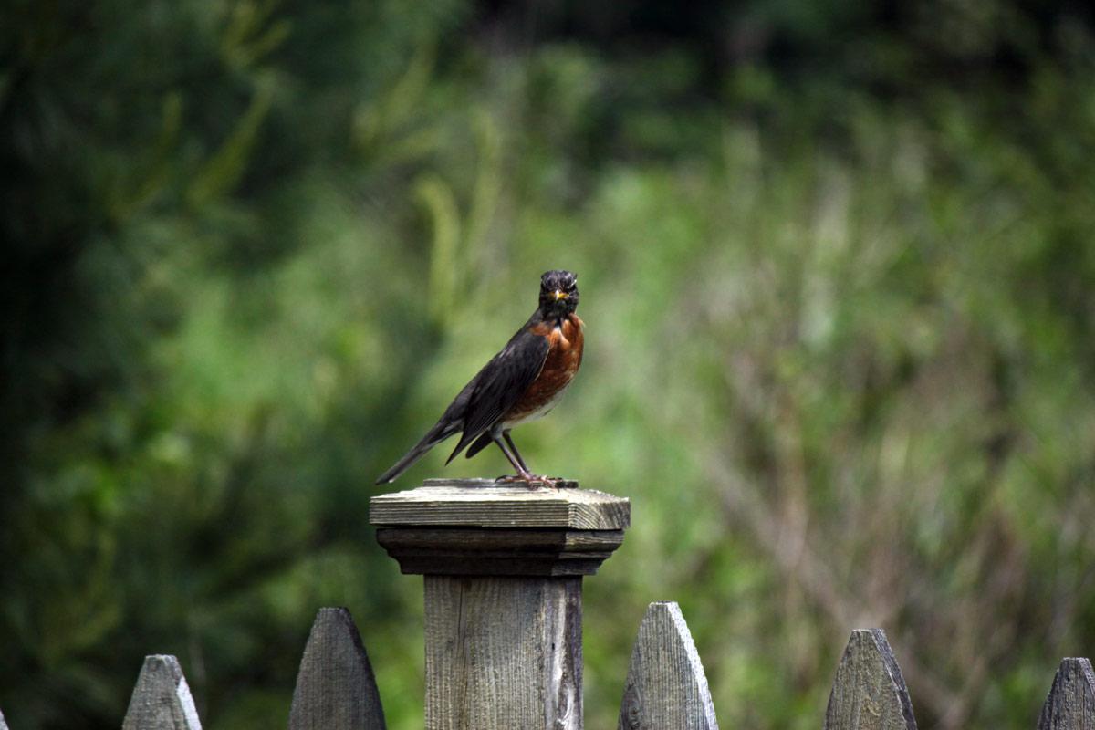 birdfence